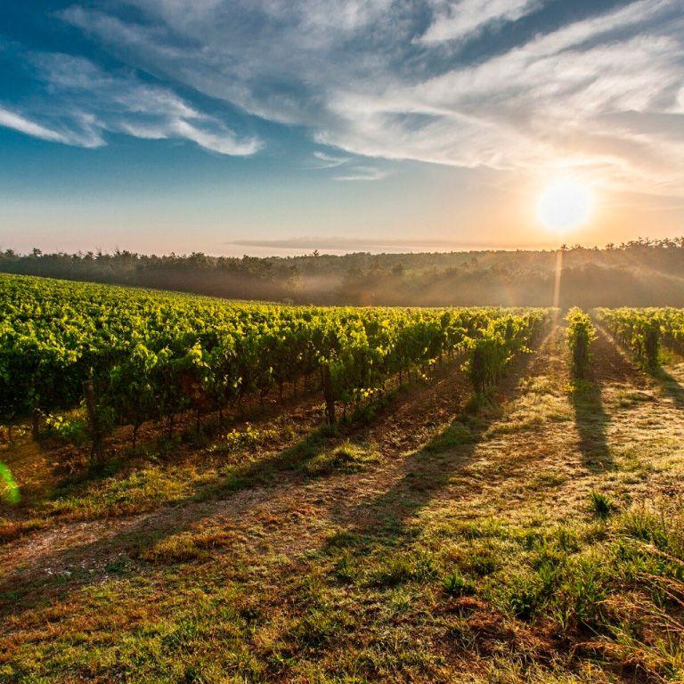 Producción agraria en La Rioja