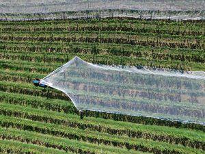El sector fitosanitario cuestiona el greening como medida contra el cambio climático 1