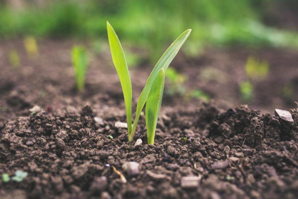 agricultura-ecológica-fitosanitario