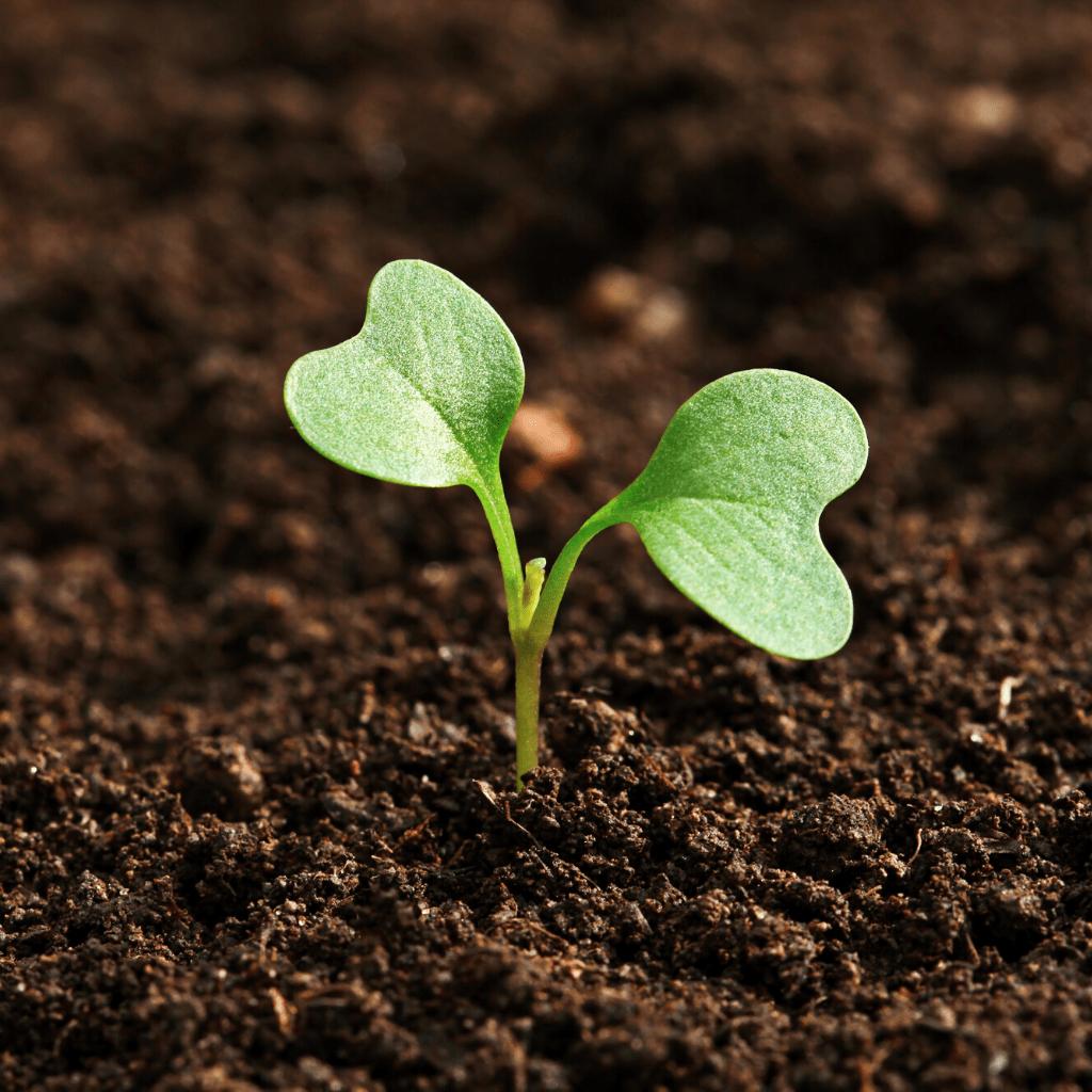 Normativa y tecnología para el sector de la protección vegetal