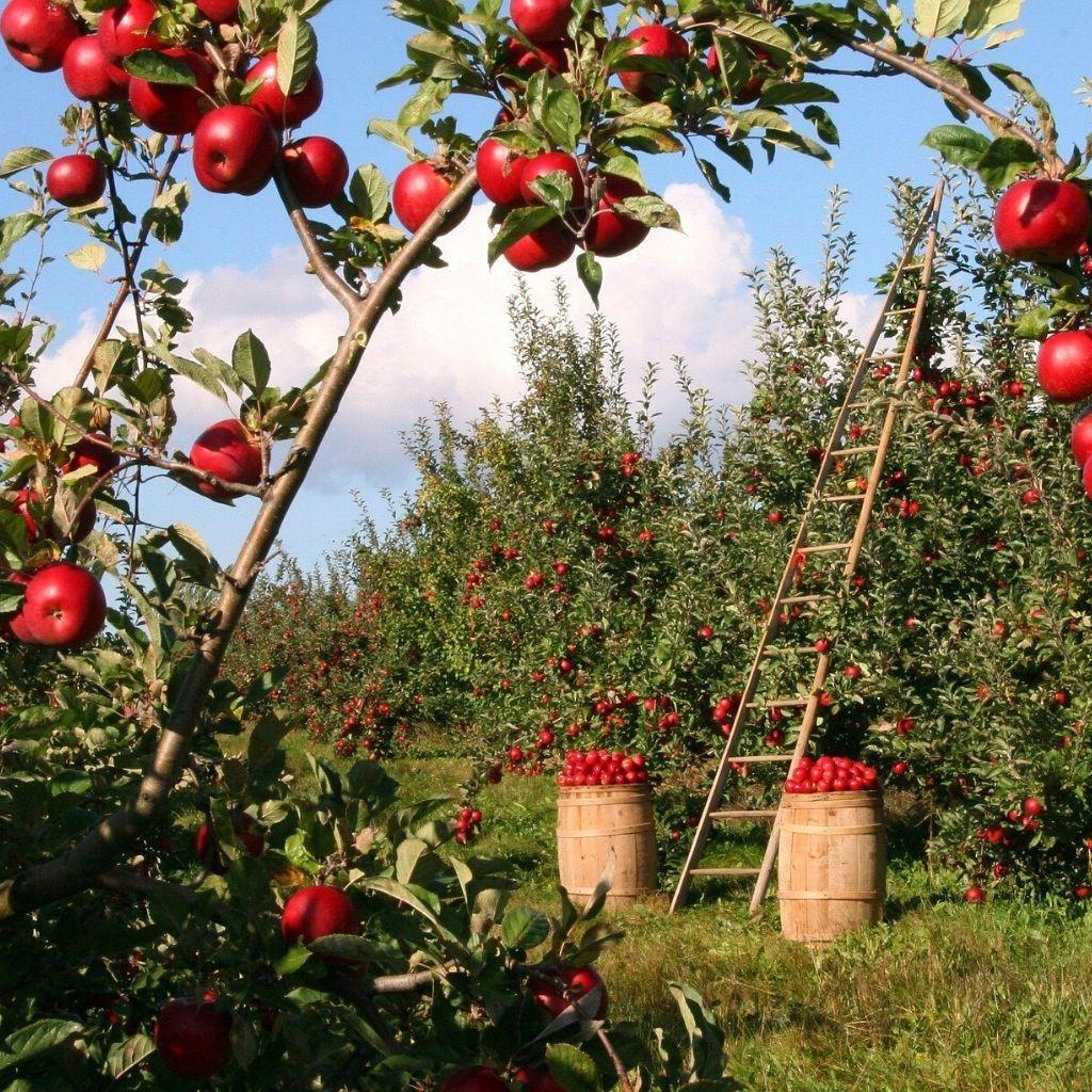 Normativa y tecnología para el sector de la protección vegetal (BASF)