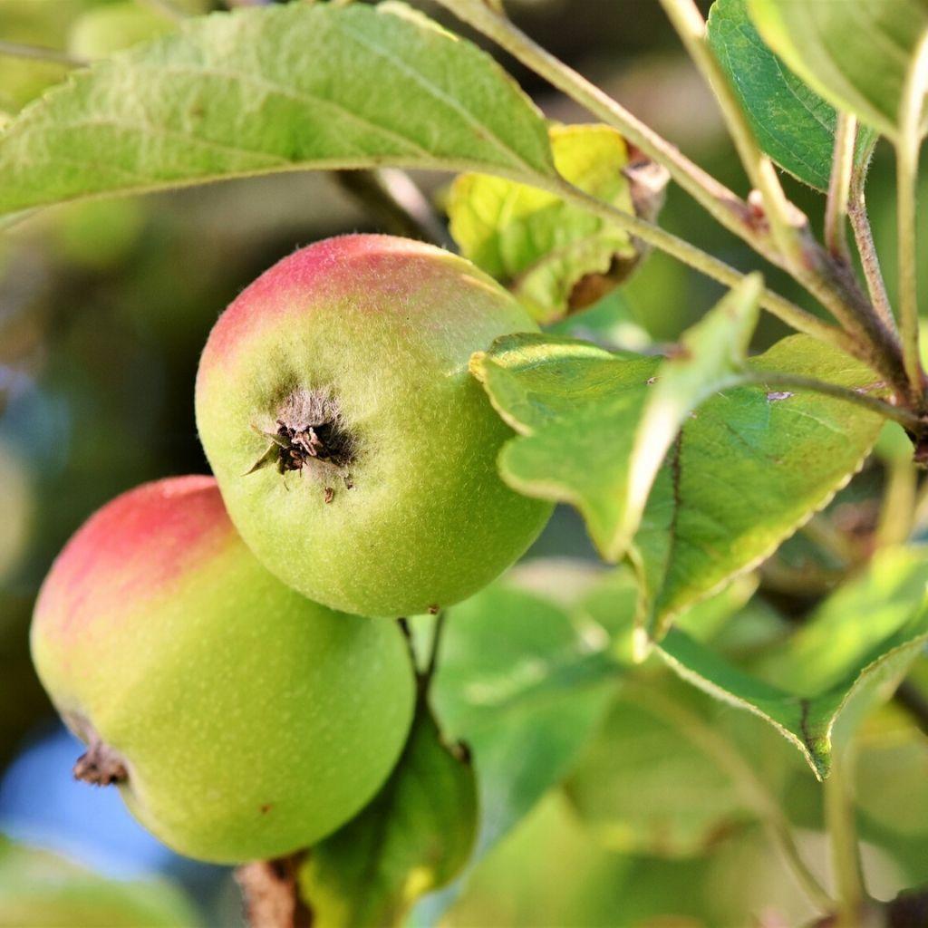 Normativa y tecnología para el sector de la protección vegetal (Noviembre)