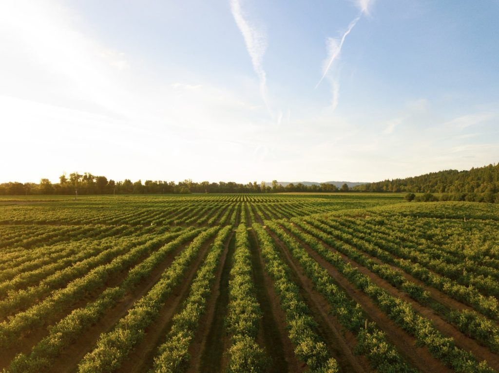 Producto fitosanitario en agricultura